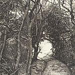 A Curious Path