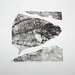 Fish Square 4